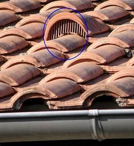 Nid De Guepe Dans Le Toit : sentinelles frelon asiatique sur toiture aaafa ~ Medecine-chirurgie-esthetiques.com Avis de Voitures