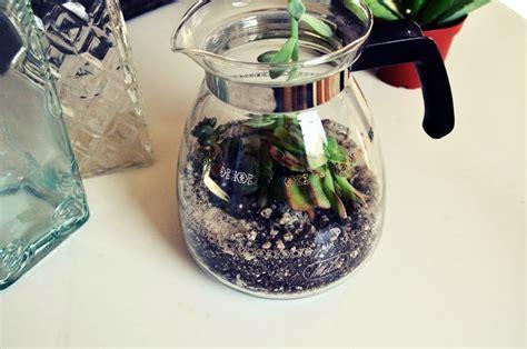 kate diy coffee pot succulent terrarium