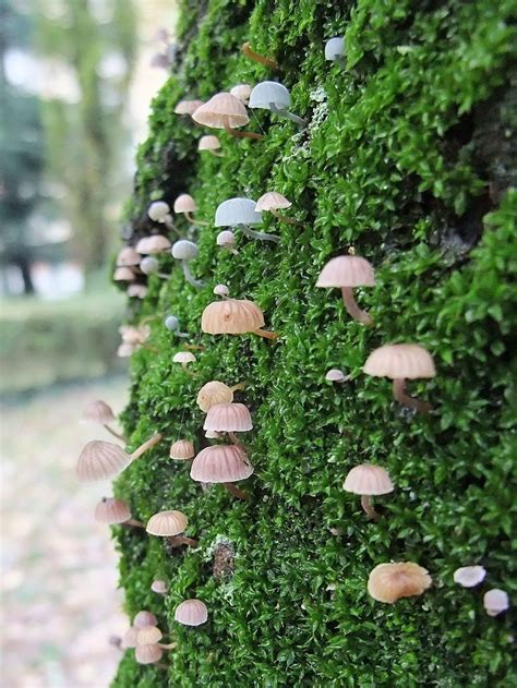 25 best moss for century 25 best images about inspiration from nature on
