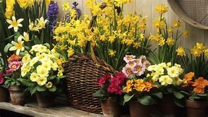 Spring Desktop Flower Wallpapers Nature Flowers Pc