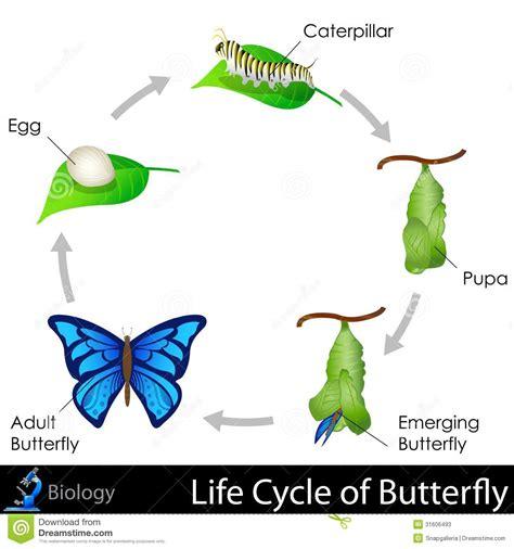 cycle de vie de papillon photos stock image 31606493