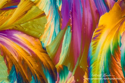 The Art & Science of Photomicrography with Polarized Light