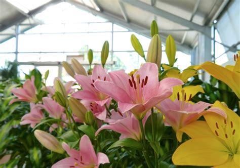 garden fiori e piante fiori e piante garden cooperativa sociale il germoglio
