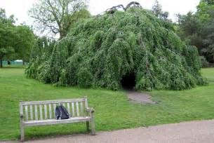 file hyde park tree jpg
