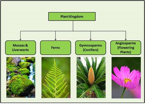 Classification Of Plants  4 Major Types Of Plants