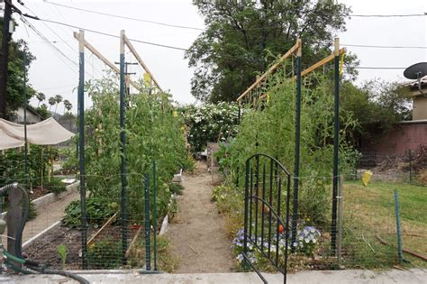 andies  arched tomato trellis