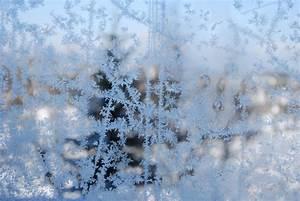 Blumen Im Winter : schwemmholz am traunsee blumen im winter ~ Eleganceandgraceweddings.com Haus und Dekorationen