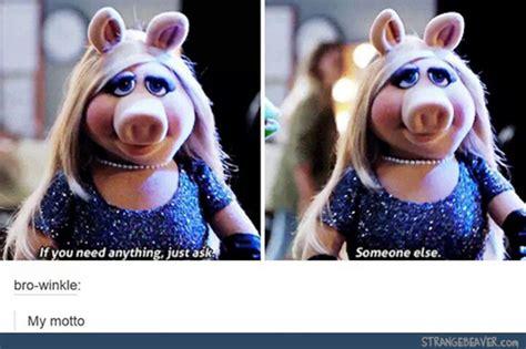 tumblr tuesday 11 10 strange beaver