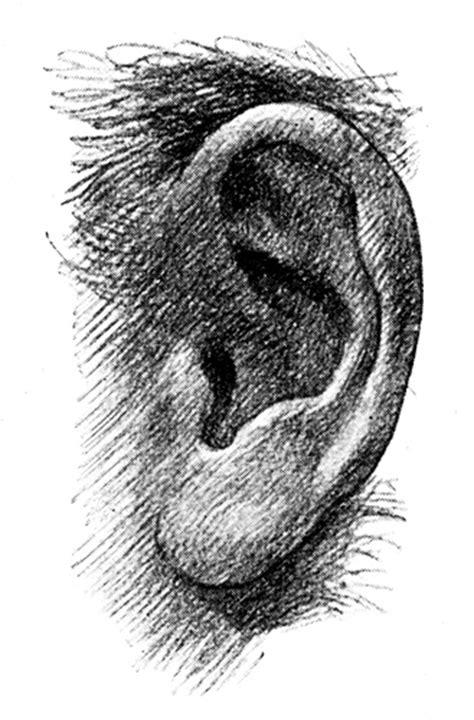 printable ears   clip art  clip art