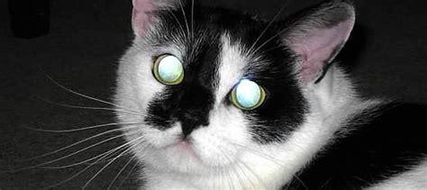 vitamin  deficiency  cats nasc