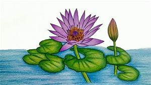 How To Draw water lily step by step (Very easy) || Water ...