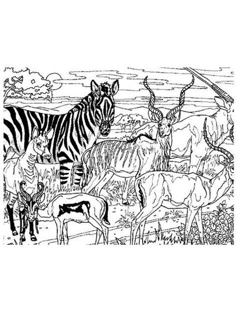 disegni da colorare animali della savana animali animali della savana da stare e colorare