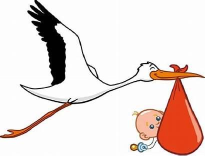 Storks Babies Deliver Delivery Special Bring Stork
