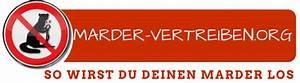 Marder Vom Auto Fernhalten : marder vertreiben 2018 marder fernhalten von auto haus und garten ~ Frokenaadalensverden.com Haus und Dekorationen