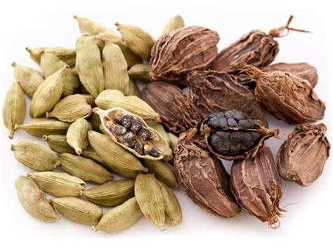 what is cardamom 11 amazing benefits of cardamom organic facts