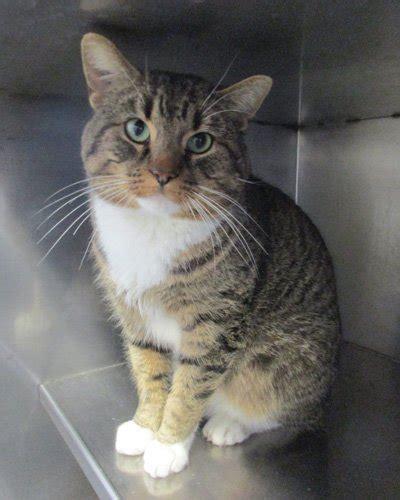 cats  fiv finding homes  whs winnipeg humane society