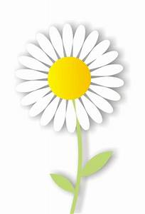 different types of daisies | types of daisy flowers ...
