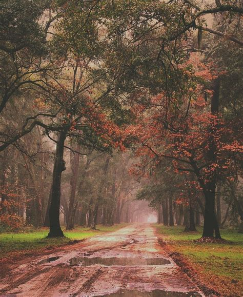 Fall Esthetic Backgrounds by Aesthetic Alone Alternative Autumn Background Image