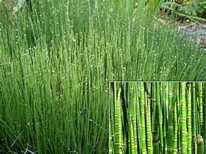 Plantes Pour Jardin Japonais Exterieur : plantes japonaises exterieur l 39 univers du jardin ~ Premium-room.com Idées de Décoration