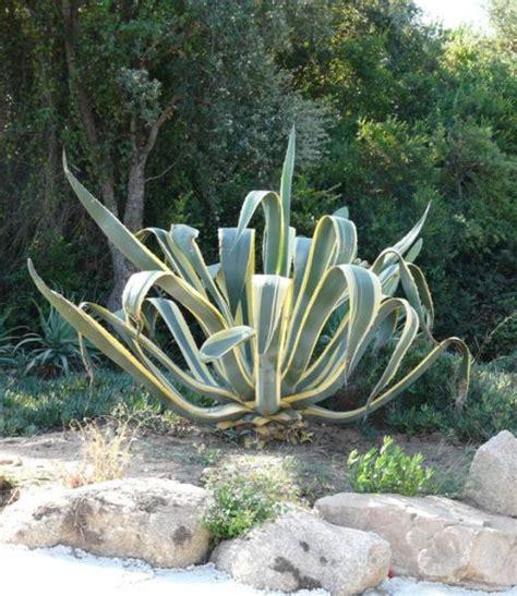 plantes grasses d exterieur reverba
