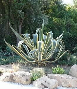 Plantes Grasses Extérieur : plantes grasses d exterieur ~ Dallasstarsshop.com Idées de Décoration