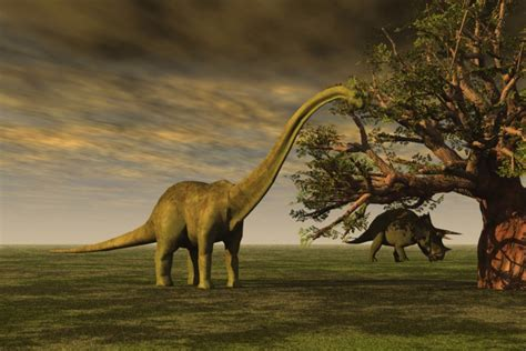 If the Brontosaurus Can Make a Comeback, So Can You