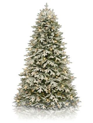 frosted fraser fir christmas tree balsam hill australia