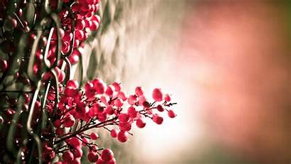 Macro Nature Flowers Plants Chain Link Backgrounds