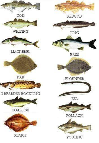 sea fish  uk waters types  fish fishing uk fish