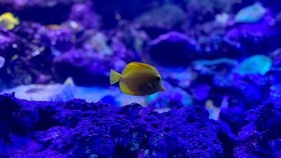 Fish Aquarium Zebrasoma 4k Corals Monitor Ultrawide
