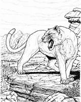 Coloring Pages Panther Lion Cougar Mountain Cat Animal Tiger Colouring Sheets Animals Books Printable Drawing Panthers Print Wildlife Adult Catz sketch template