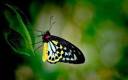 Butterfly 3d Wallpapers Desktop Butterflies Backgrounds Screen