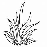 Grass Coloring Seaweed Pages Drawing Plants Clipart Outline Simple Template Colouring Tall Lemon Thrives Growing Sheet Clip Sketch Tree Templates sketch template