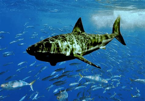 Atlanta Naacp Announces Search For Great Black Shark The