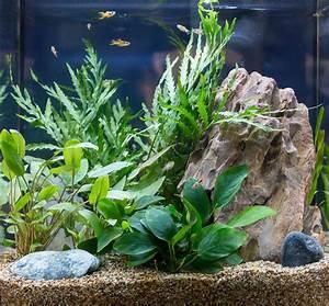 Unconventional, Aquarium, Plants, U2013, Choosing, Fish, Tank, Garden, Plants