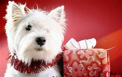 Puppy Christmas Wallpapers Cave