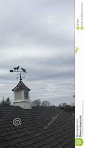dog and cat weathervane stock photo image 53146623 With barn roof topper