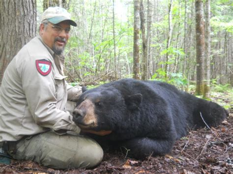hunter ends mystery  long lost research bear  maine