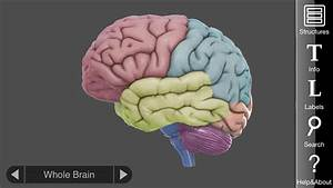 3d Brain App  An Interactive Way To Learn About The Different Parts Of The Human Brain