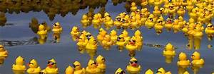 Discoveries made of… rubber ducks! - 8 Magazine