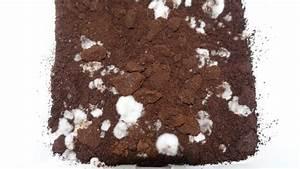 Austernpilze Selber Züchten : pilzzucht pilze selber z chten pilzanbau f r haus und garten ~ Orissabook.com Haus und Dekorationen