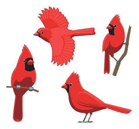 Cardinal Clipart Cardinal Bird Clipart