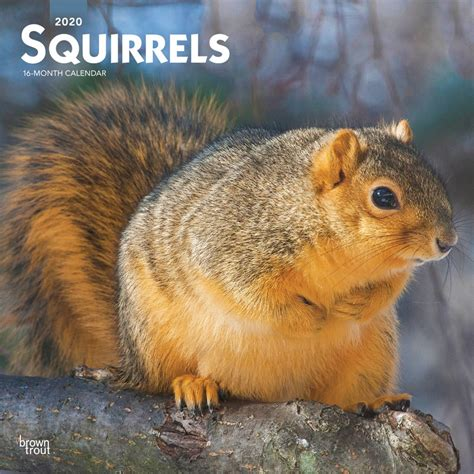 squirrels monthly square wall calendar wildlife