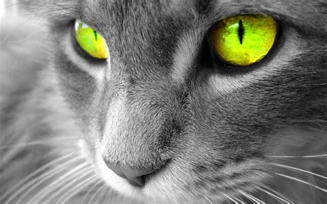 Best Desktop Hd Wallpaper  Cat Desktop Wallpapers