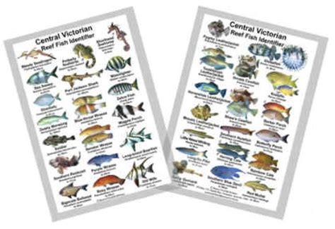 fish identification guides reef fish identification