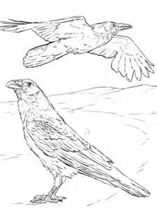 common raven coloring page  printable coloring pages