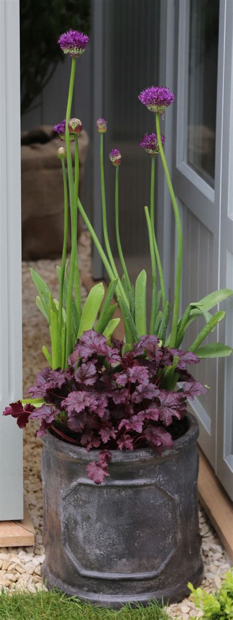 bulb planting ideas 72 best ideas for planting bulbs in the garden containers images on pinterest flowers garden