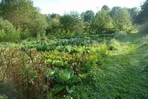 Mischkultur Im Garten : mischkultur und kompost bau ~ Orissabook.com Haus und Dekorationen