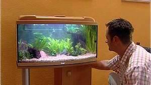 Fische Für Anfänger : kleine fische 1 ein aquarium selbst einrichten videoworkshops f r selbermacher ~ Orissabook.com Haus und Dekorationen