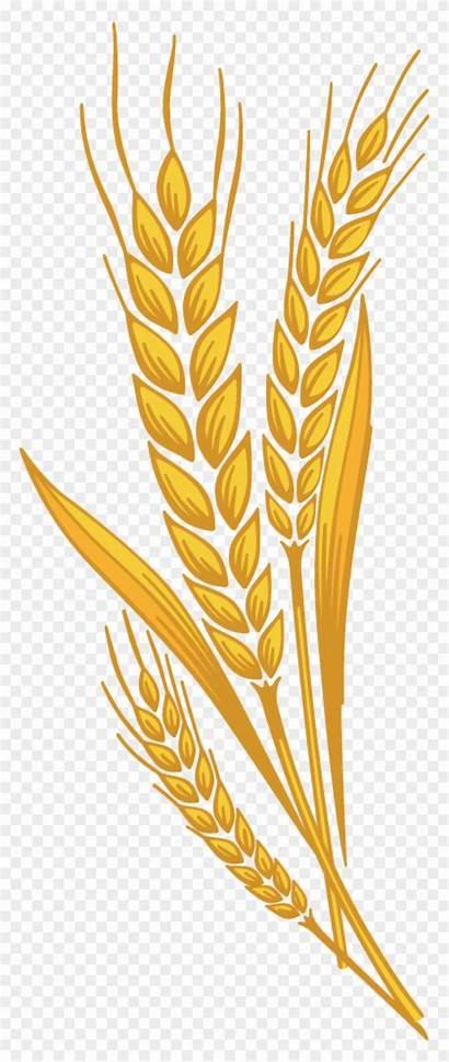 Wheat Clipart Transparent Barley Harvest Vector Svg